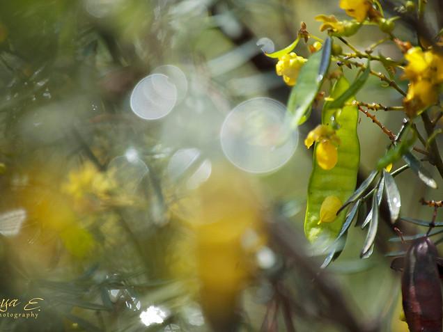 Last rain drops #1 טיפות של גשם אחרון
