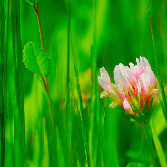 Green & Pink ירוק וורוד