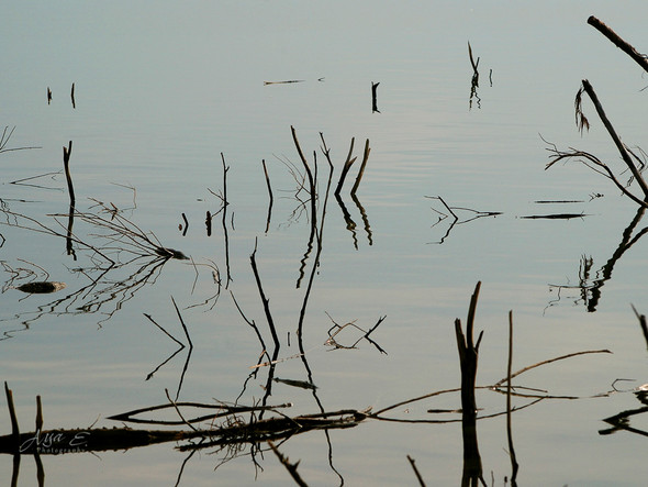 sticks in the water