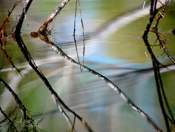 reflection Eshel