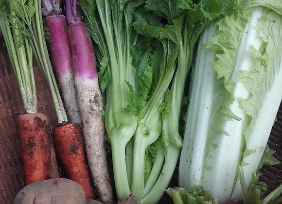 おまかせ野菜セット【 九州にお住まいの方限定】