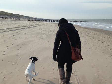 Dogsmopolitan Hundetraining in Domburg