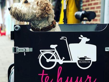 DOG-E-BIKE bei Dogsmopolitan in Domburg - Lastenfahrrad für Hunde