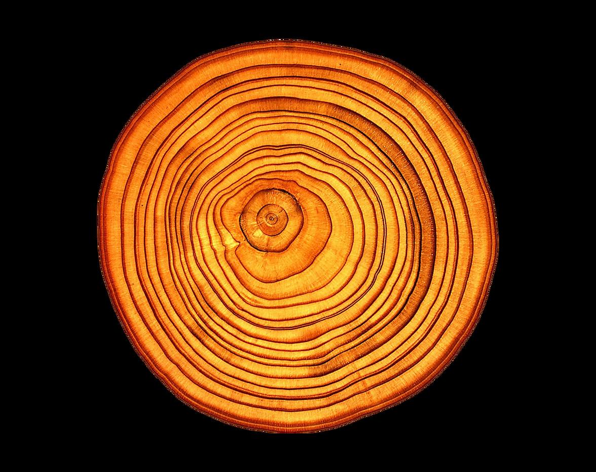 Log V2.png