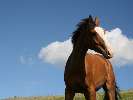 To Ride or Not to Ride? The ethics of horse riding