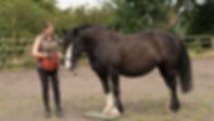 Peak Equine