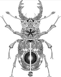 beetleflower