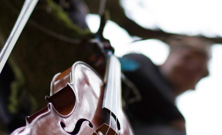 Fiddle in Tree