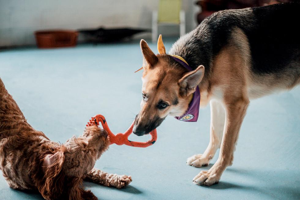 Dogs Life-10.jpg
