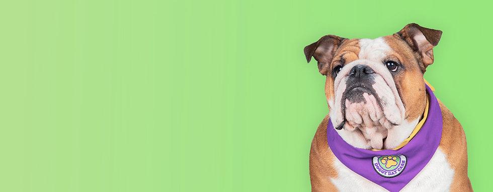 Dog3.2.jpg