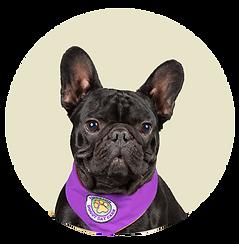 circle dog.2 psd.png