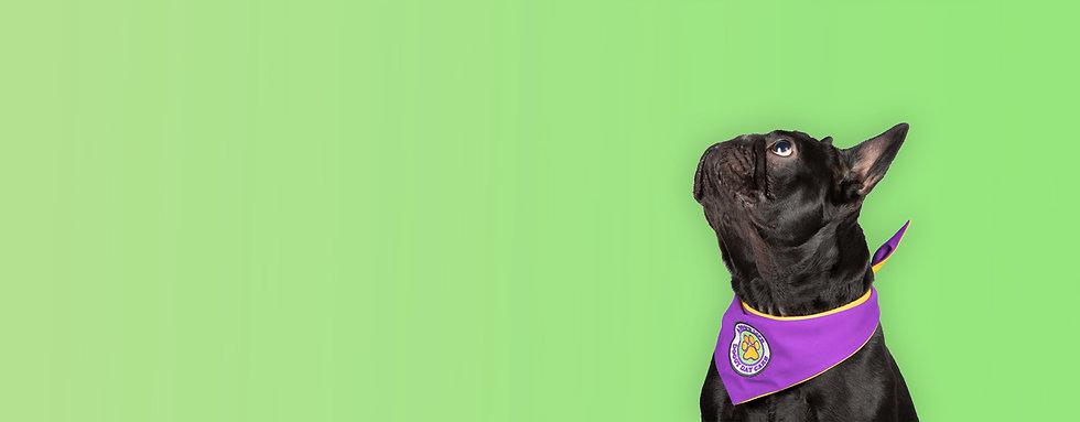 Dog2.1.jpg