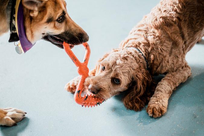 Dogs Life-11.jpg