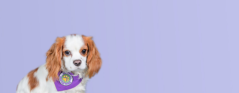 Dog4.1.jpg