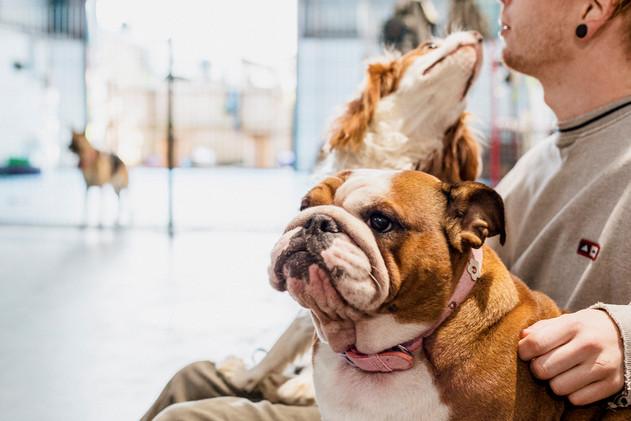Dogs Life-23.jpg