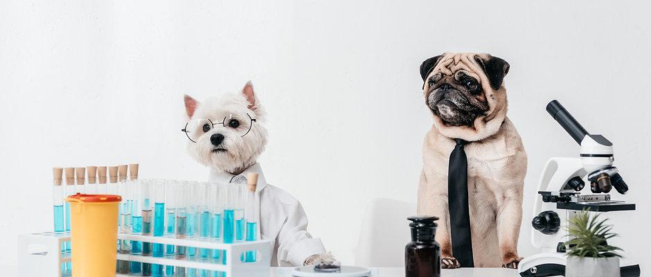 Pet Intolerance Test
