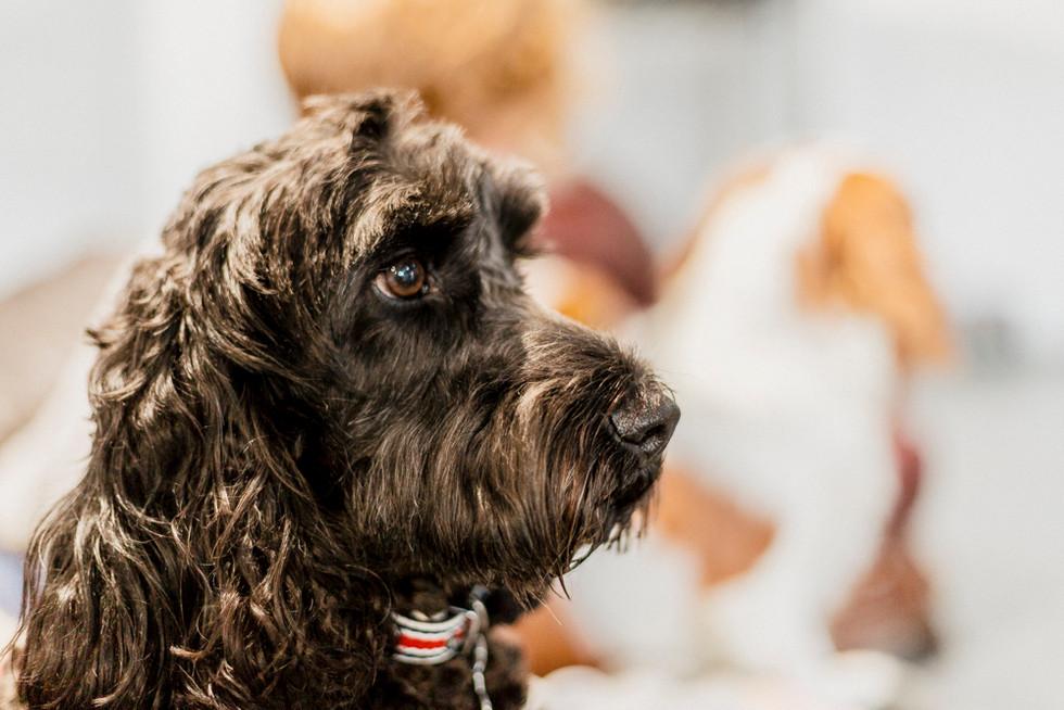 Dogs Life-22.jpg