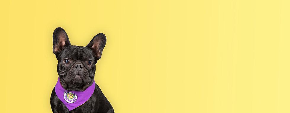 Dog2.2.jpg