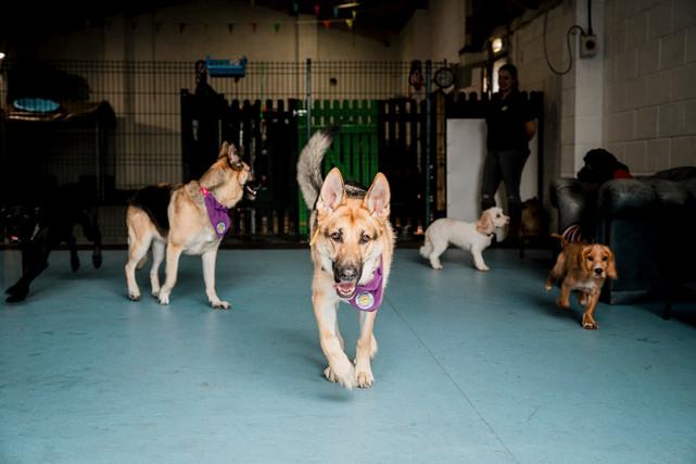 Dogs Life-1.jpg