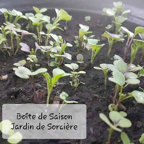 Boîte de Saison : Grand Jardin de Sorcière et Célébrations Printanières