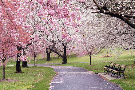Springtime Treasures.jpg