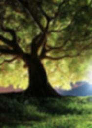 arbre_maître_yecohkna.jpg
