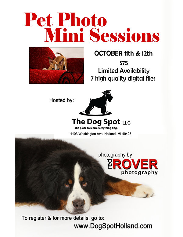 Flyer_TheDogSpot_pgcolor (1).jpg