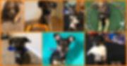 Stefanie dogs.jpg