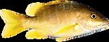 fish-png-transparent-image-2000.png