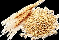 purepng.com-wheatwheatgraincerealseed-14