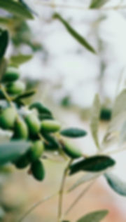과일과 잎