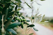 Principio attivo olio di oliva sollievo e benessere per il trattamento della forfora