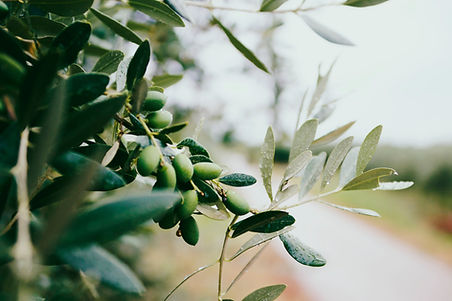 Obst und Blätter