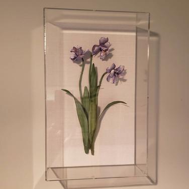 Dwarf Iris.jpg