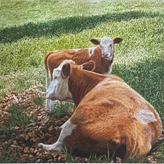 American Dairy by Peter Krobath