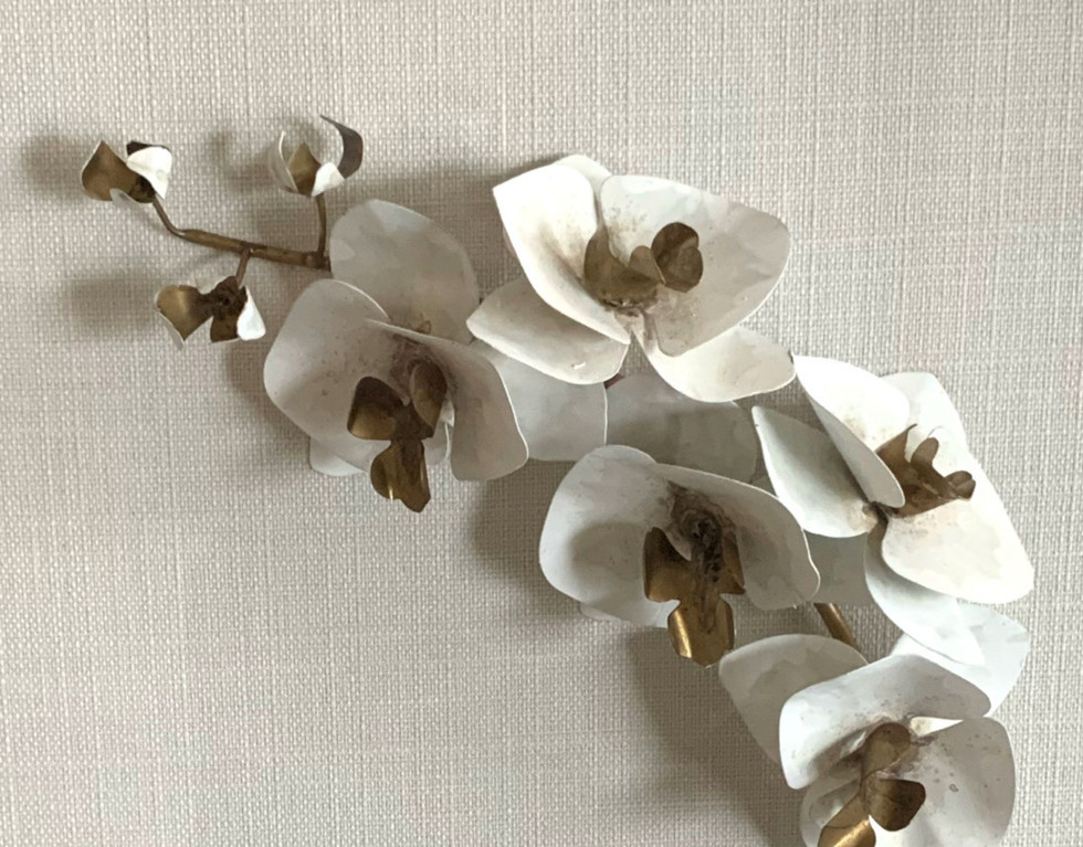 Flower Studies - Orchid