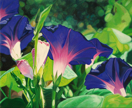 morning glories II.jpg