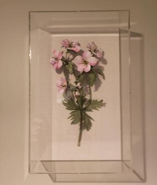 Wild Geranium Pink.jpg