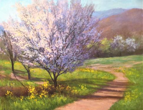 """Wild Cherry Trees in Virginia"""