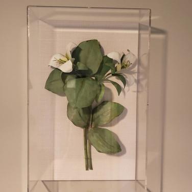 Trillium White.jpg