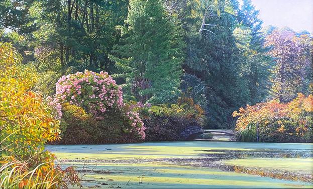wild hydrangea.jpg
