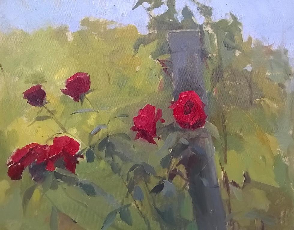 Roses at Pontassieve