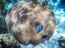Captain Bryan's Underwater