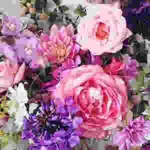 Dorset Flowers