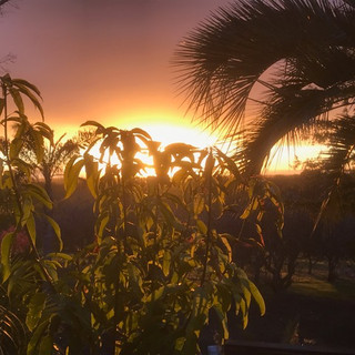 Sunrise through Gary's Winters Mango Tree