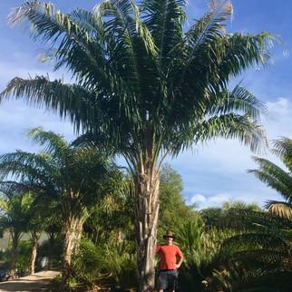 'Coconut Queen'