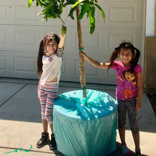 Here is our Grande 25 gallon tree