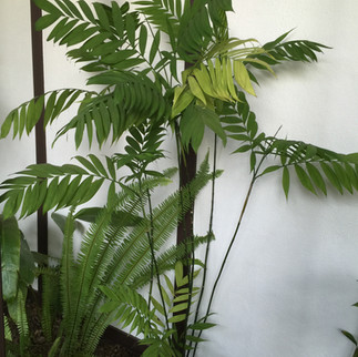 Cold Hardy Bamboo Palm