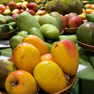 Mango Festival Fairchild Tropical Botanical Garden