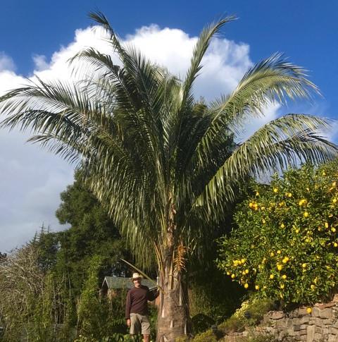Bolivian Coconut